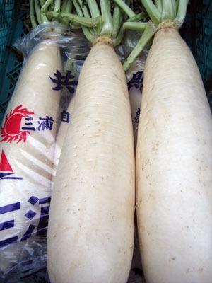 正月野菜-膾(なます)には本三浦大根