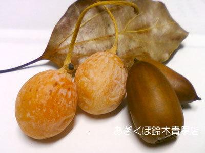 秋の味覚「銀杏」-収穫したら、まず水洗い