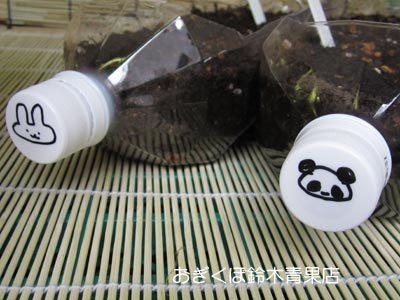 【荻窪農園#2】横型ペットボトルプランターを追加