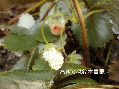 【荻窪農園#15】台風のソノゴ。
