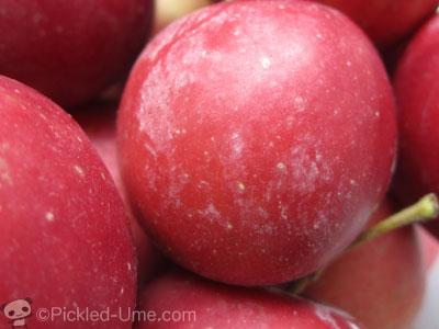 果実の表面に白い粉 – ごくごく自然なブルームです