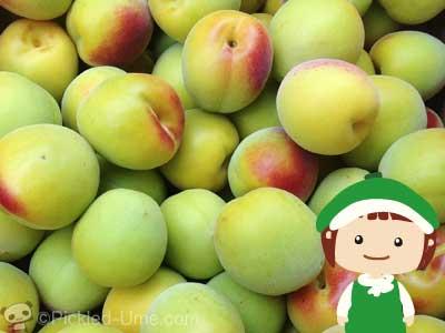 今年の樹熟南高梅は味が濃いです(^-^)