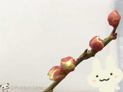 春はもうすぐ(^〜^)