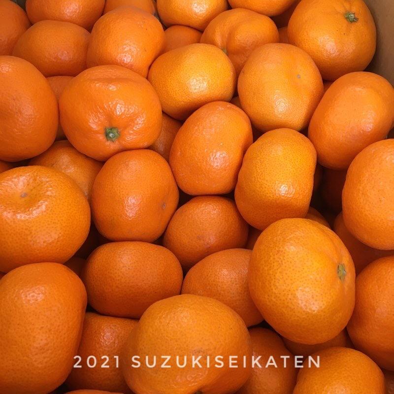 柑橘類祭り♪(。•̀ᴗ-)و ̑̑✧